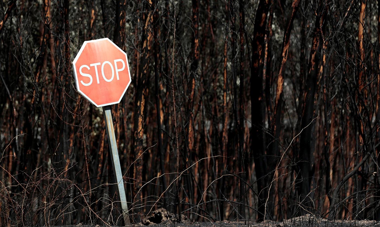 Реакција на ФПСМ за забраната за движење во шума