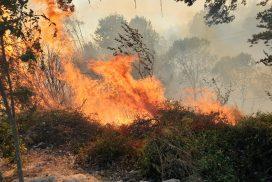 Делумна забрана за движење во шумите и шумското земјиште со кои стопанисува ЈП Македонски шуми